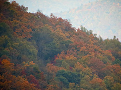 Colors of the Season ..