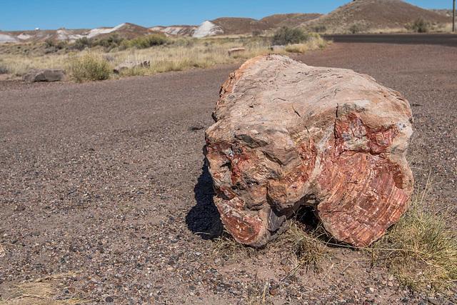 The Petrified Forest23 Arizona