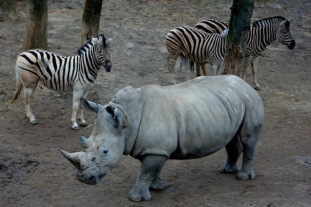 Gaja Zoo.....