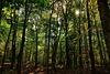 Automne 2016 forêt 1 / 3