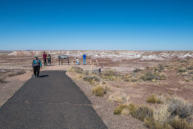 The Petrified Forest33