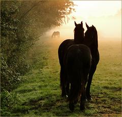 # 1 - Horse Love...