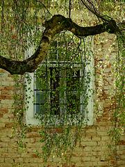 Fensterschmuck ;)