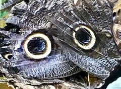 Zwei große Augen :)