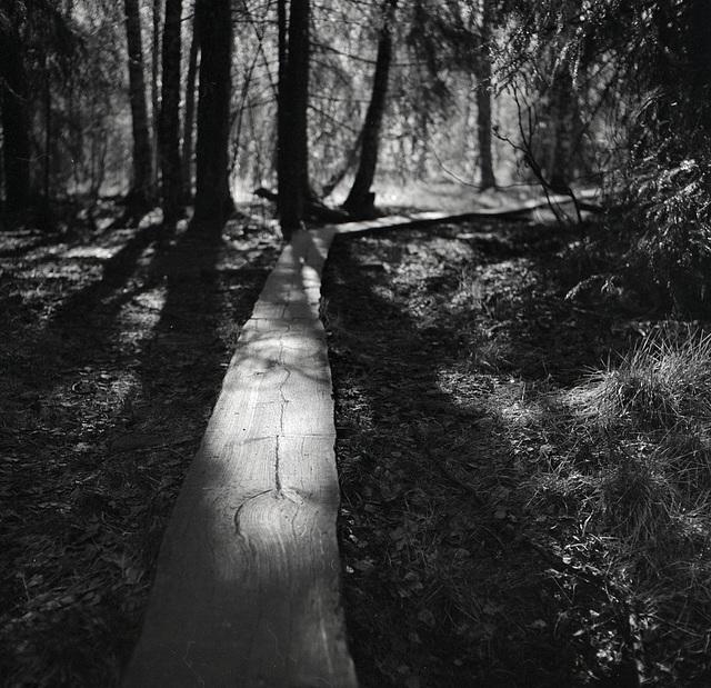Plank path