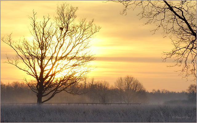 When the Sun is coming up behind the Tree...