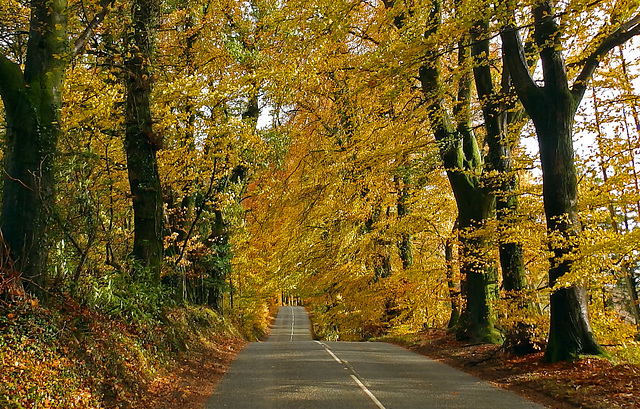 Autumn colours on the Blackdown Hills of Somerset.
