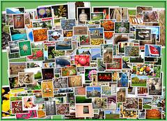 364/365-Bilder (meines) Jahres 2015