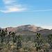 Cima Dome & Volcanic Field National Natural Landmark