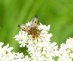 l'élégance de la mouche