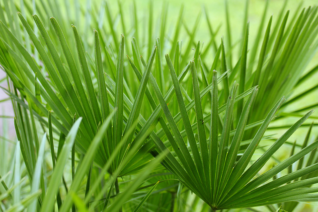 Couleurs de palmes