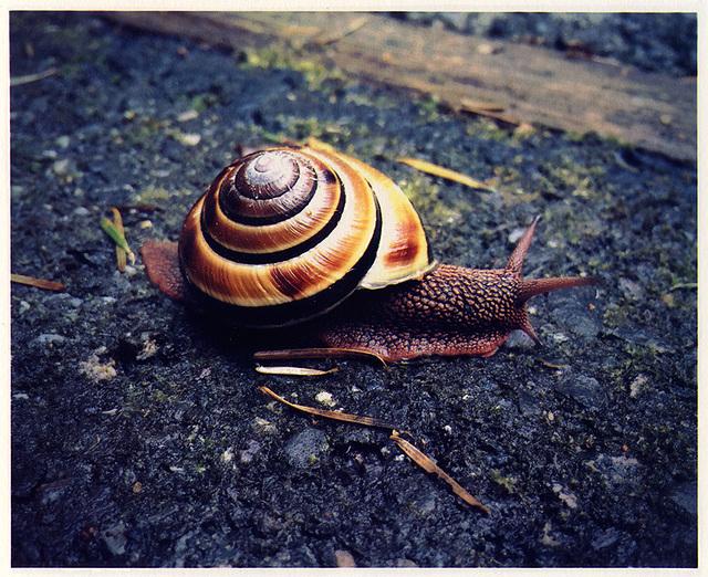 Sams-Slug