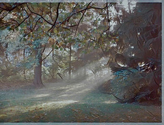 Autumn Morning / ಶರತ್ಕಾಲದ  ಬೆಳಿಗ್ಗೆ