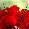 MM Devils flower