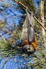 Meet a Flying Fox