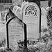 Hartington churchyard (6)