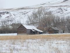 Prairie life in winter