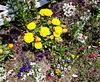Yellow Marigolds Dominate