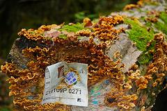 Ein vergessener Baumstamm - A forgotten tree trunk