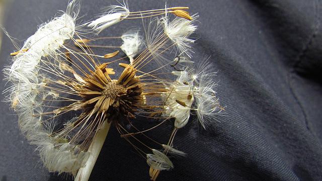 flores secas 0034