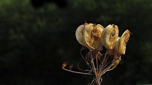 flores secas 0035