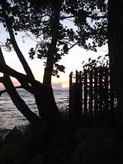 La clôture a sommeil / A sleepy fence