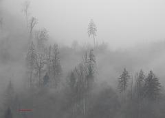 Schatten im Nebel