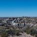 The Petrified Forest,21 Arizona