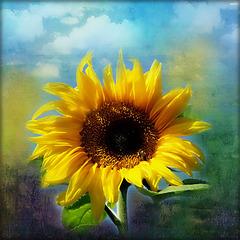 plein de soleil dans vos coeurs, bisous à tous et toutes