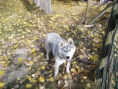 Un gentil et joli chien