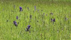 Prairie en mai