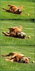 Une vie de chien ! [ON EXPLORE]