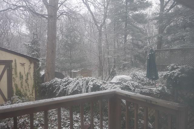 Looking towards my neighbor's backyard