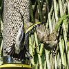 A bird feeder altercation