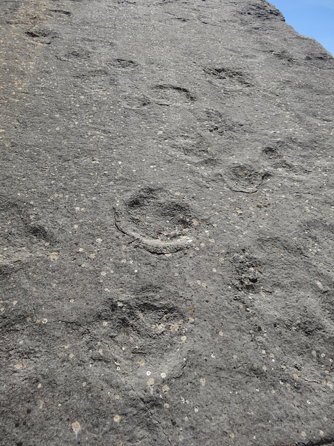 Dinosaur's footprints