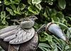 Young Sparrow and a tin bird