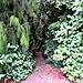 Path into the Bush.
