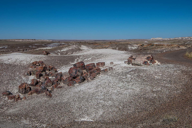The Petrified Forest5, Arizona