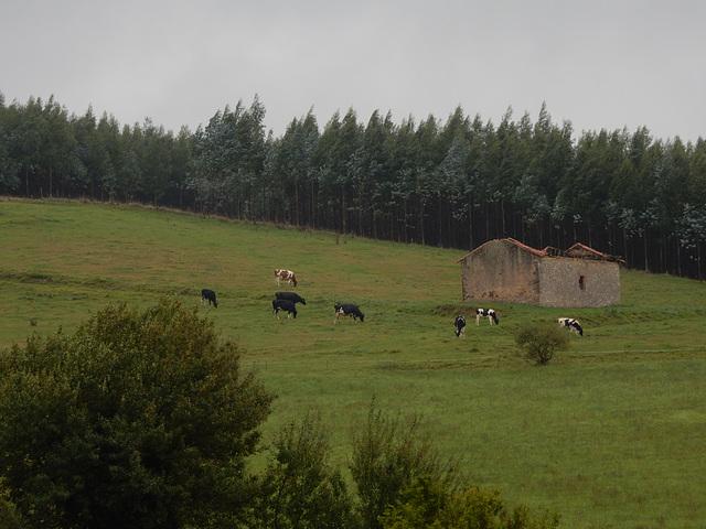 rural Cantabria