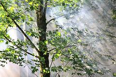 Dampf vom Wälderbähnle