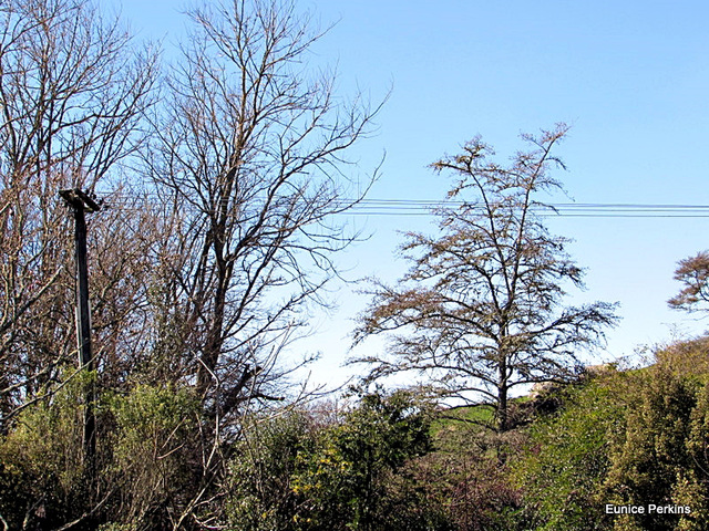 Bare Branches.