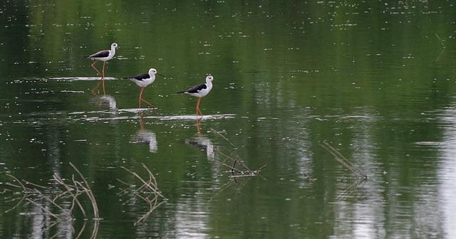 L'étang Closure - Lapeyrouse - Ain
