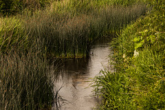 River Avon at Kellaways (1)