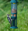 Greater spotted woodpecker4