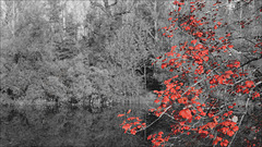 Herbstfarbe - Rot
