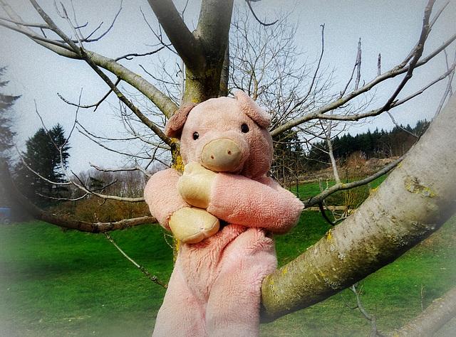 The 50 Images-Project: Doudou grimpe aux arbres... [ON EXPLORE]