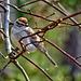 4107621 DxOdcL · Sparrow