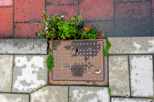 Plants like drains