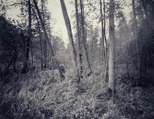 Auwald an der Bille vor Bergedorf. Direkt belichtet auf 4x5 Fotopapier. // P6-auwald-04-11-18 0893 JPG