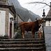Serra da Peneda, Senhora da Peneda, Vacas  barrosã